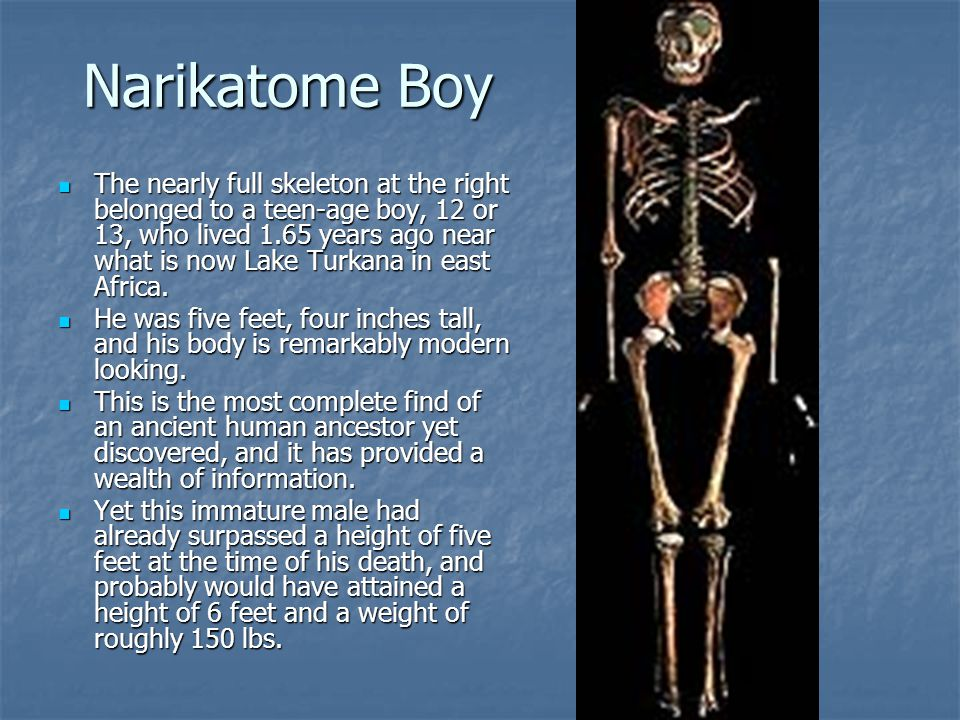Narikatome Boy The nearly full skeleton at the right belonged to a teen-age boy, 12 or 13, who lived 1.65 years ago near what is now Lake Turkana in e