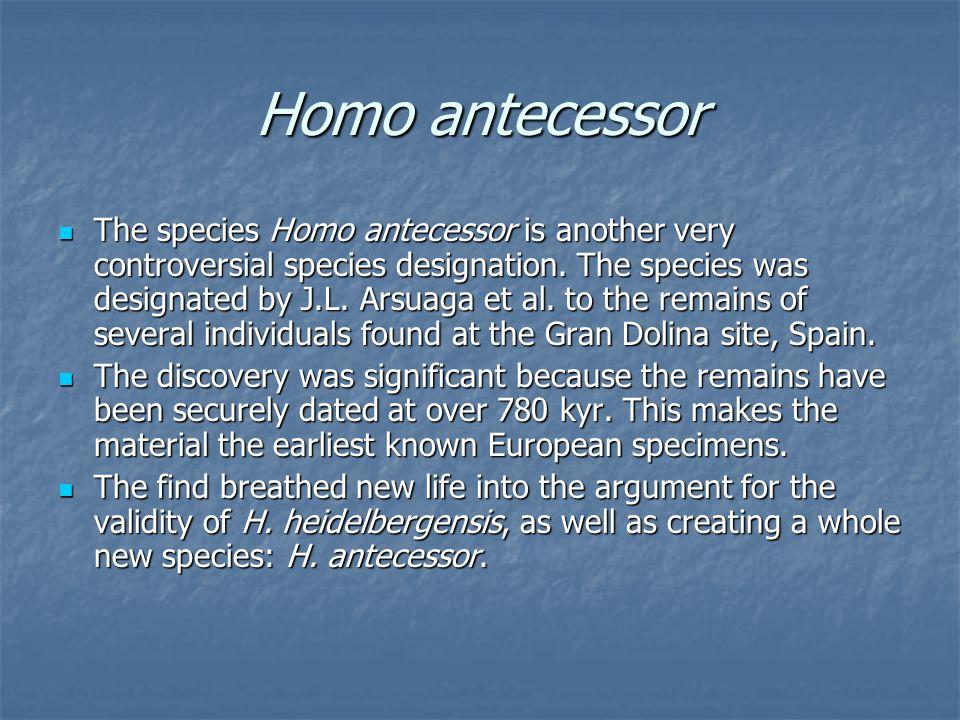 Homo antecessor The species Homo antecessor is another very controversial species designation. The species was designated by J.L. Arsuaga et al. to th