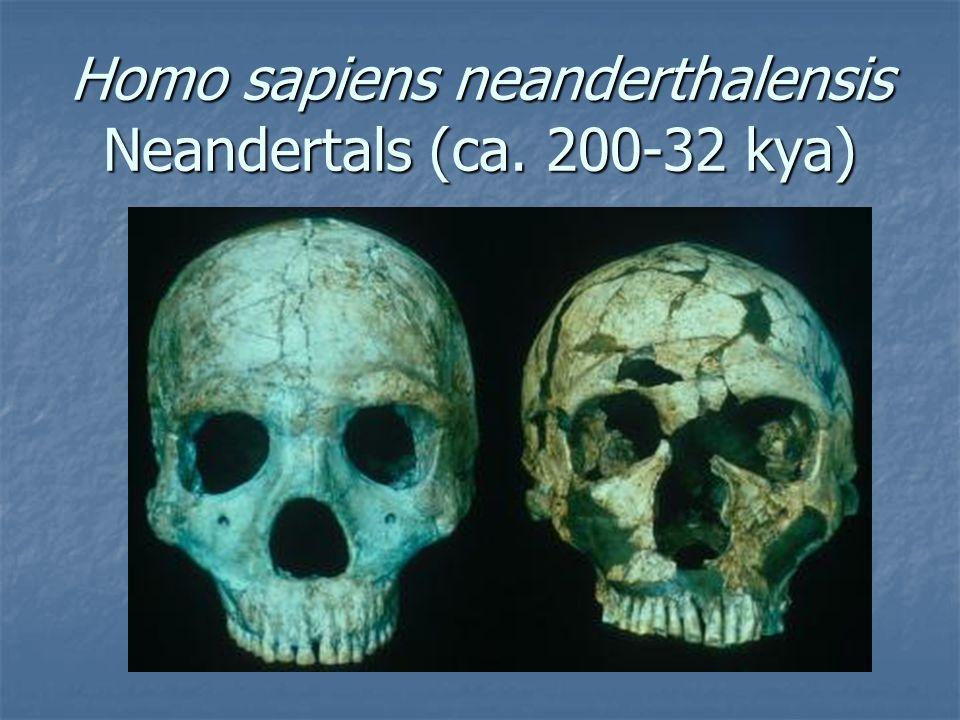 Homo sapiens neanderthalensis Neandertals (ca. 200-32 kya)