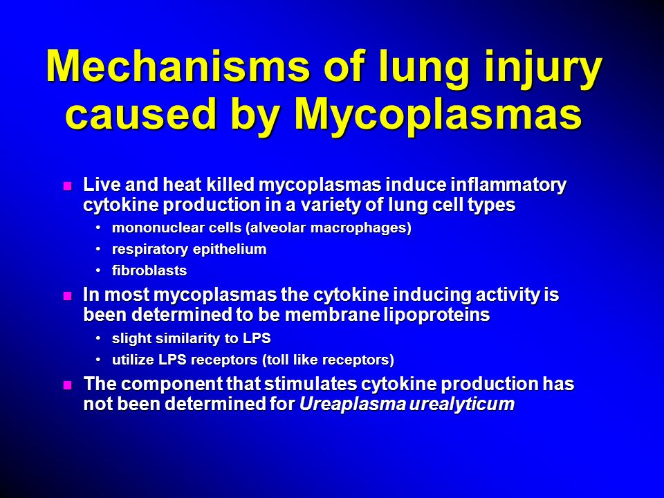 Mechanisms of lung injury caused by Mycoplasmas n Live and heat killed mycoplasmas induce inflammatory cytokine production in a variety of lung cell types mononuclear cells (alveolar macrophages)mononuclear cells (alveolar macrophages) respiratory epitheliumrespiratory epithelium fibroblastsfibroblasts n In most mycoplasmas the cytokine inducing activity is been determined to be membrane lipoproteins slight similarity to LPSslight similarity to LPS utilize LPS receptors (toll like receptors)utilize LPS receptors (toll like receptors) n The component that stimulates cytokine production has not been determined for Ureaplasma urealyticum