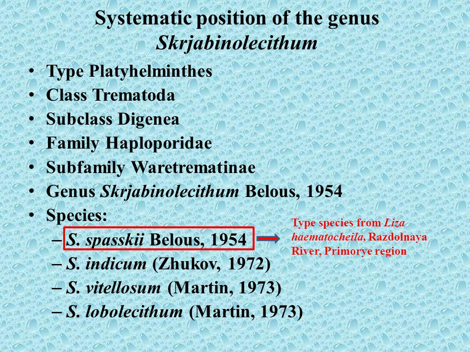 Systematic position of the genus Skrjabinolecithum Type Platyhelminthes Class Trematoda Subclass Digenea Family Haploporidae Subfamily Waretrematinae Genus Skrjabinolecithum Belous, 1954 Species: – S.
