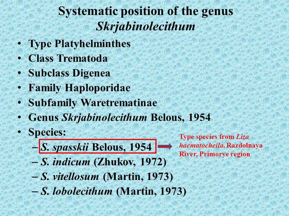 Skrjabinolecithum spasskii: А – mature specimen (original data), B – mature specimen from Belous (1954).