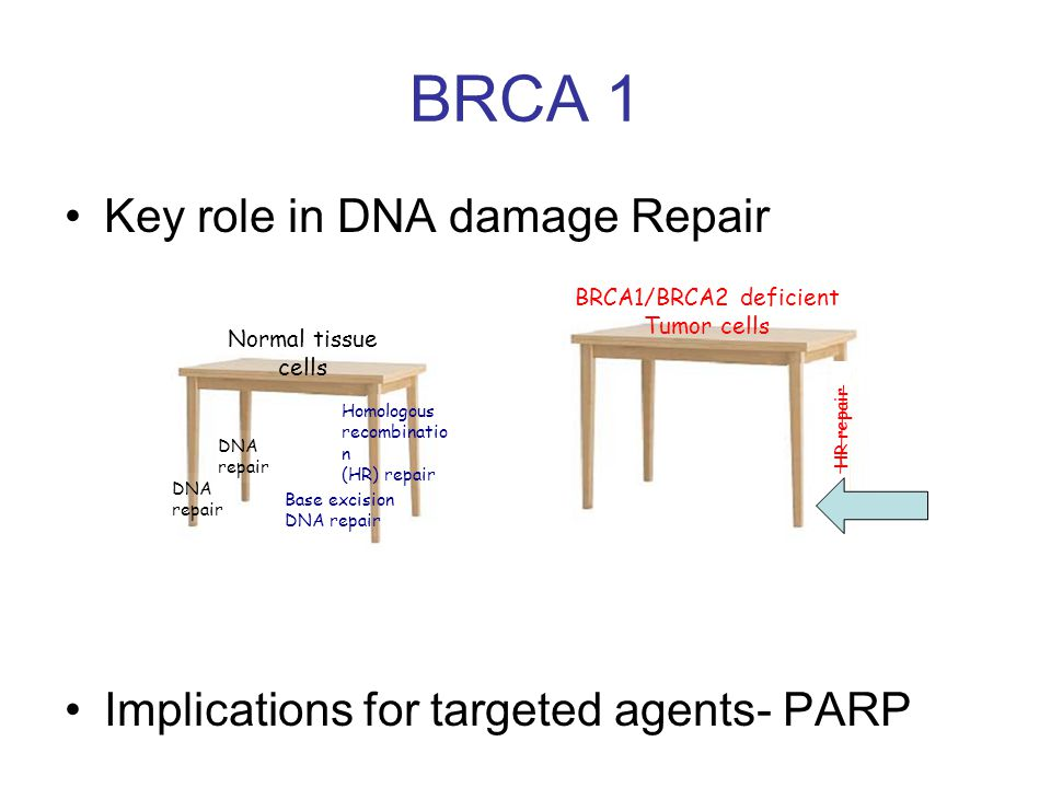Key role in DNA damage Repair Implications for targeted agents- PARP BRCA 1 Normal tissue cells DNA repair DNA repair Base excision DNA repair Homologous recombinatio n (HR) repair BRCA1/BRCA2 deficient Tumor cells HR repair