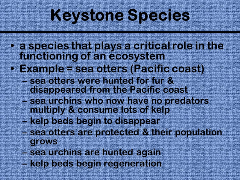Keystone Species a species that plays a critical role in the functioning of an ecosystem Example = sea otters (Pacific coast) –sea otters were hunted for fur & disappeared from the Pacific coast –sea urchins who now have no predators multiply & consume lots of kelp –kelp beds begin to disappear –sea otters are protected & their population grows –sea urchins are hunted again –kelp beds begin regeneration