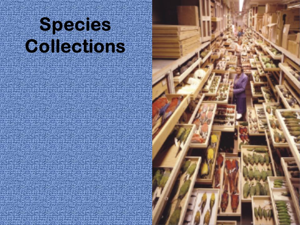 Species Collections