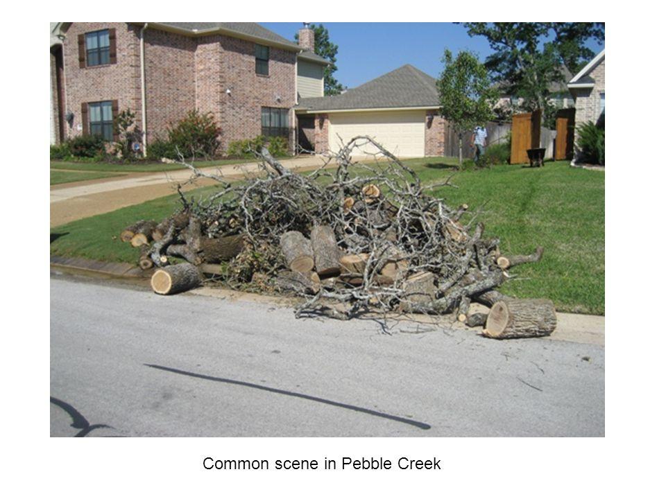 Common scene in Pebble Creek