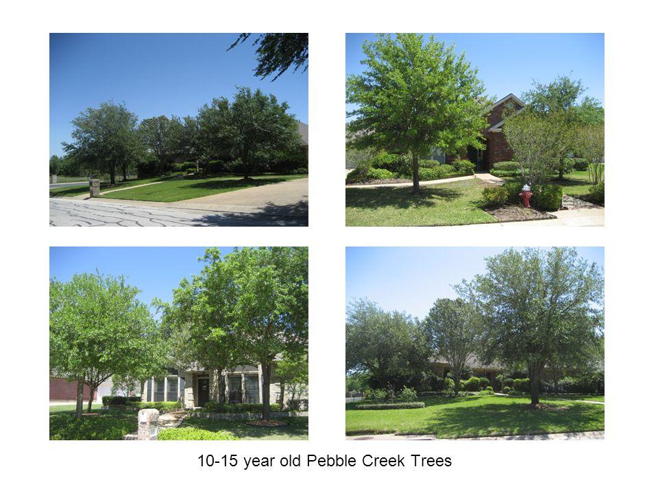 10-15 year old Pebble Creek Trees