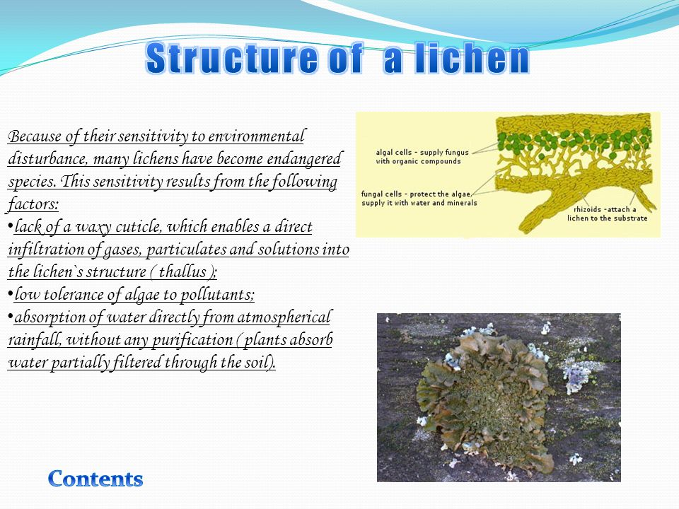 Because of their sensitivity to environmental disturbance, many lichens have become endangered species.