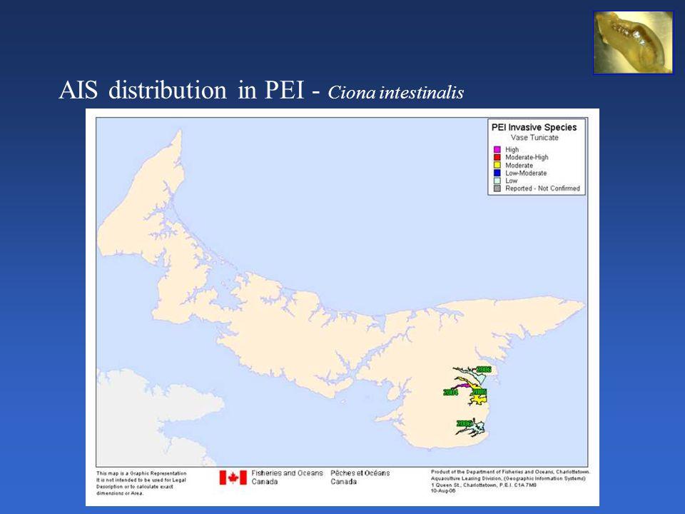 AIS distribution in PEI - Ciona intestinalis