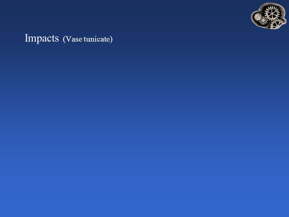 Impacts (Vase tunicate)