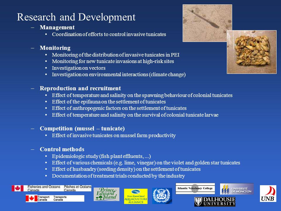 –Management Coordination of efforts to control invasive tunicates –Monitoring Monitoring of the distribution of invasive tunicates in PEI Monitoring for new tunicate invasions at high-risk sites Investigation on vectors Investigation on environmental interactions (climate change) –Reproduction and recruitment Effect of temperature and salinity on the spawning behaviour of colonial tunicates Effect of the epifauna on the settlement of tunicates Effect of anthropogenic factors on the settlement of tunicates Effect of temperature and salinity on the survival of colonial tunicate larvae –Competition (mussel – tunicate) Effect of invasive tunicates on mussel farm productivity –Control methods Epidemiologic study (fish plant effluents,...) Effect of various chemicals (e.g.
