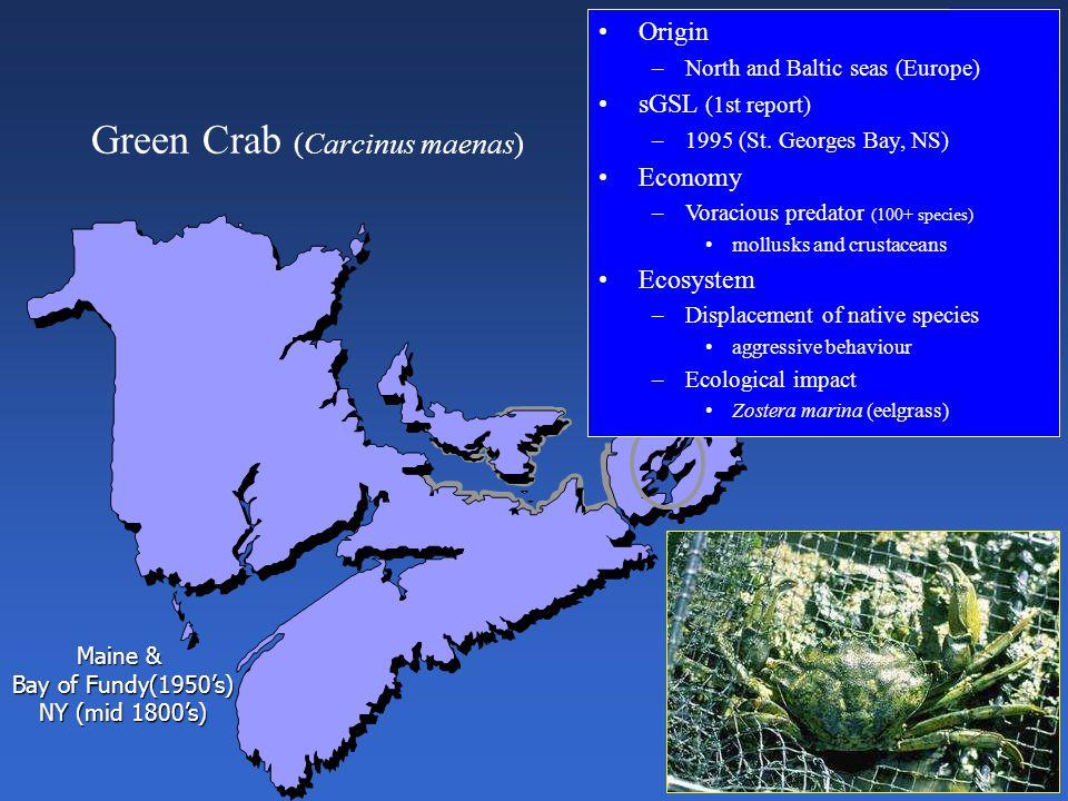 Green Crab (Carcinus maenas) Origin –North and Baltic seas (Europe) sGSL (1st report) –1995 (St.