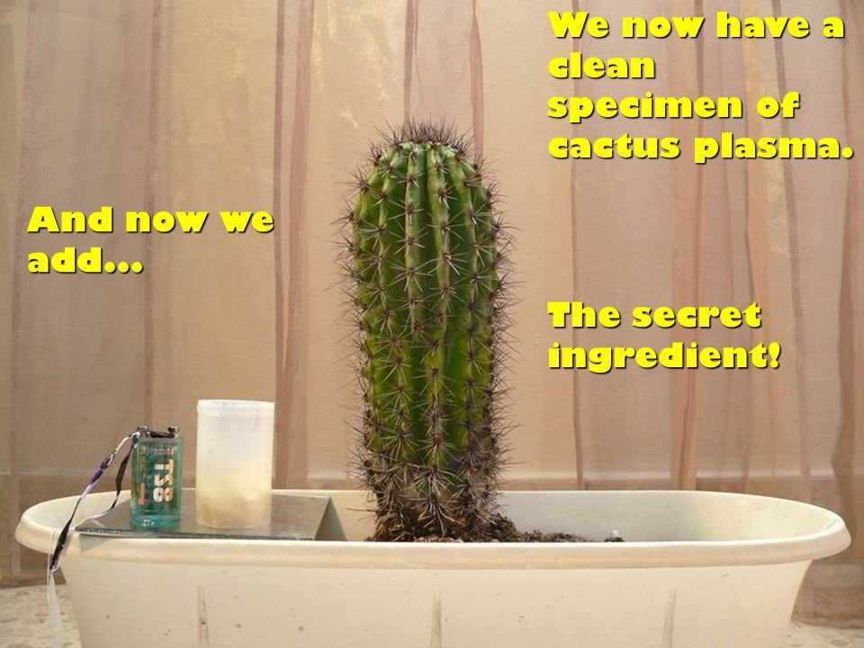 We now have a clean specimen of cactus plasma. And now we add... The secret ingredient!