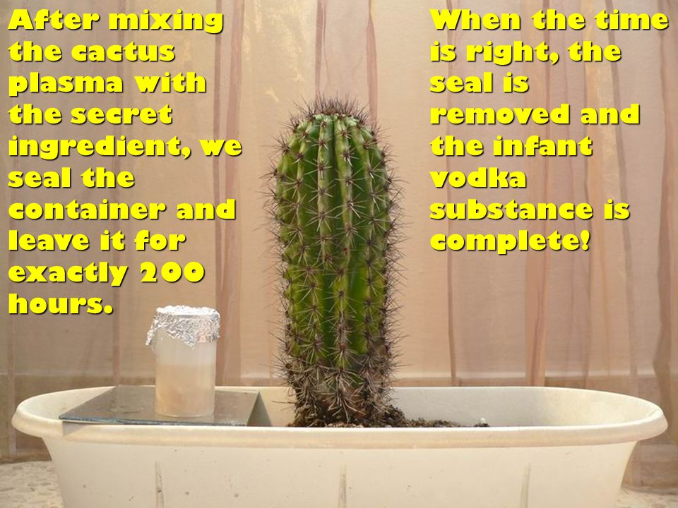 After mixing the cactus plasma with the secret ingredient, we seal the container and leave it for exactly 200 hours.