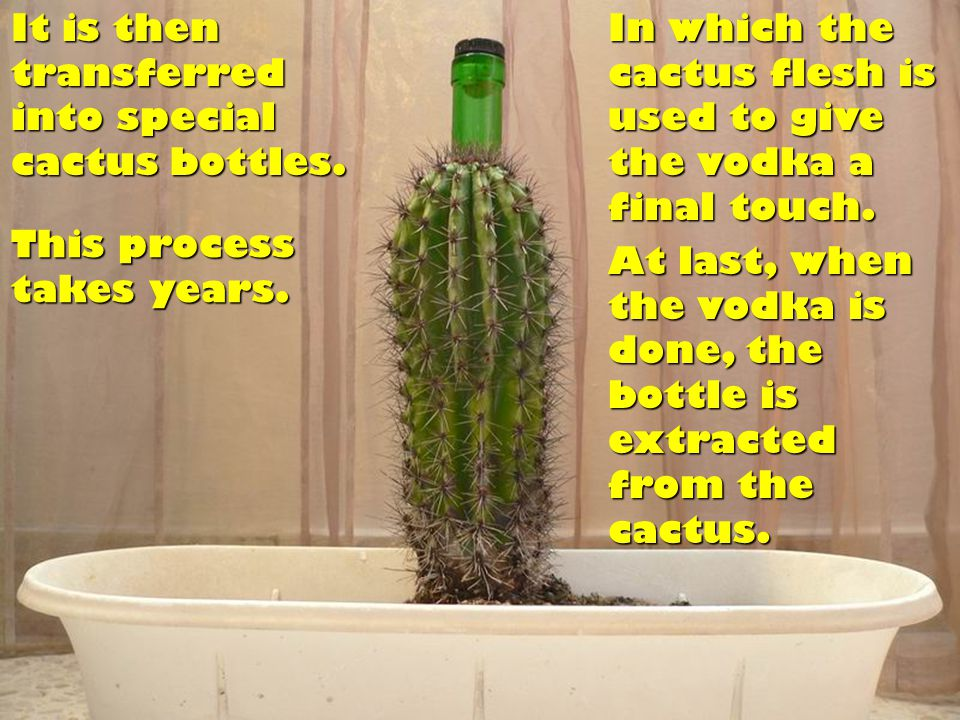 It is then transferred into special cactus bottles.