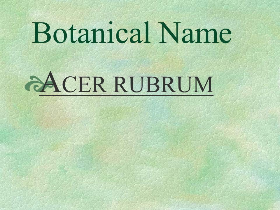 Botanical Name  A CER RUBRUM