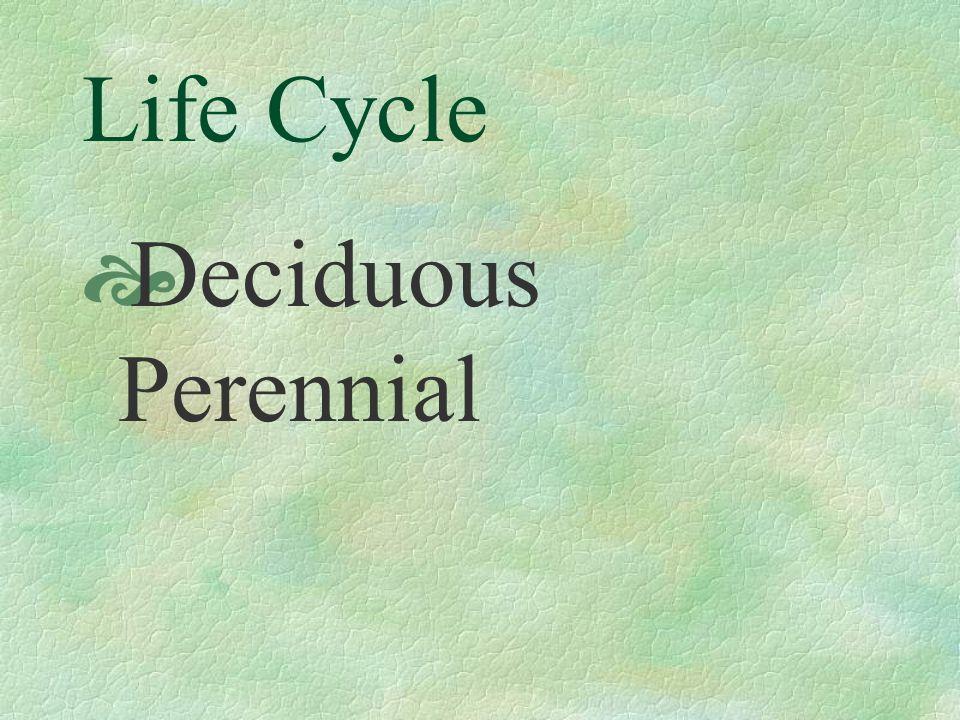 Life Cycle  Deciduous Perennial