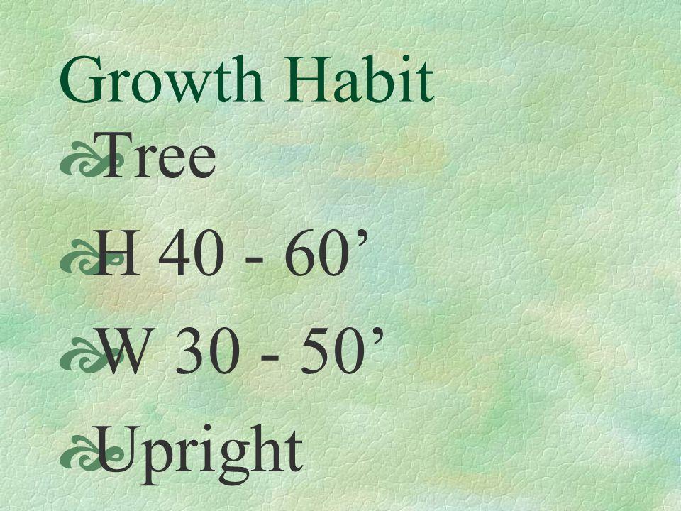 Growth Habit  Tree  H 40 - 60'  W 30 - 50'  Upright