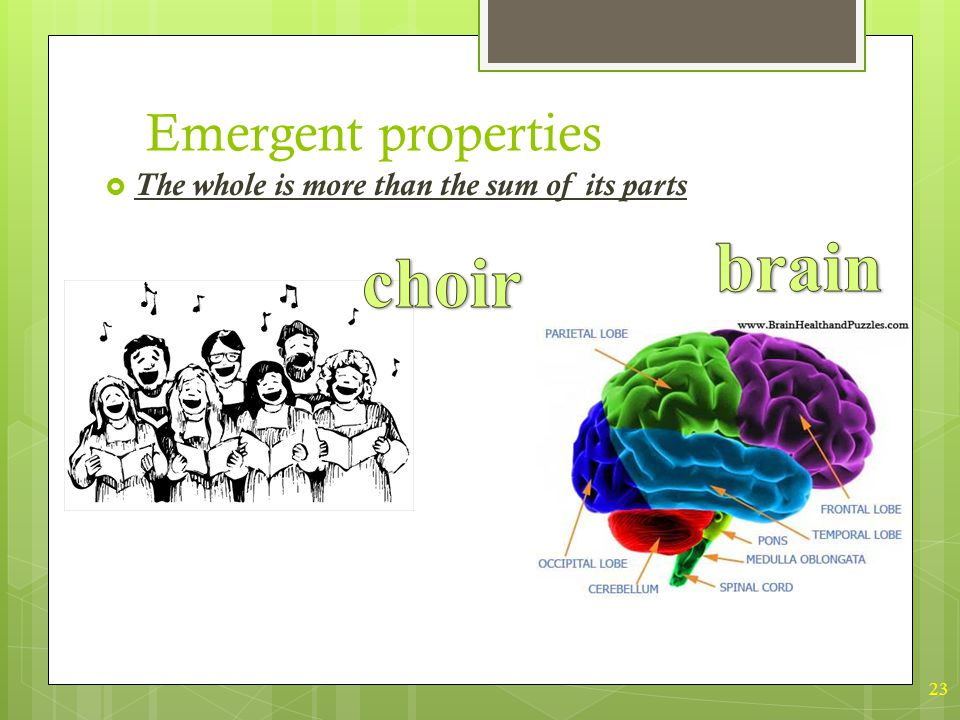 23 Emergent properties  The whole is more than the sum of its parts