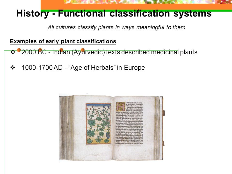 History - Functional classification systems All cultures classify plants in ways meaningful to them Examples of early plant classifications  2000 BC - Indian (Ayurvedic) texts described medicinal plants  1000-1700 AD - Age of Herbals in Europe