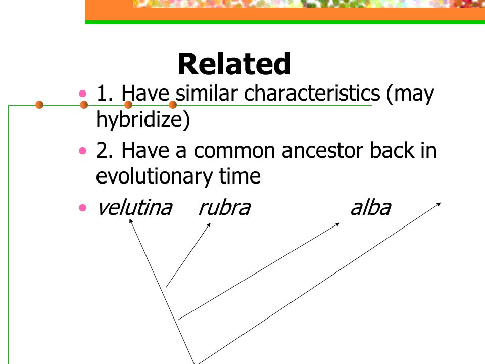 Related 1.Have similar characteristics (may hybridize) 2.