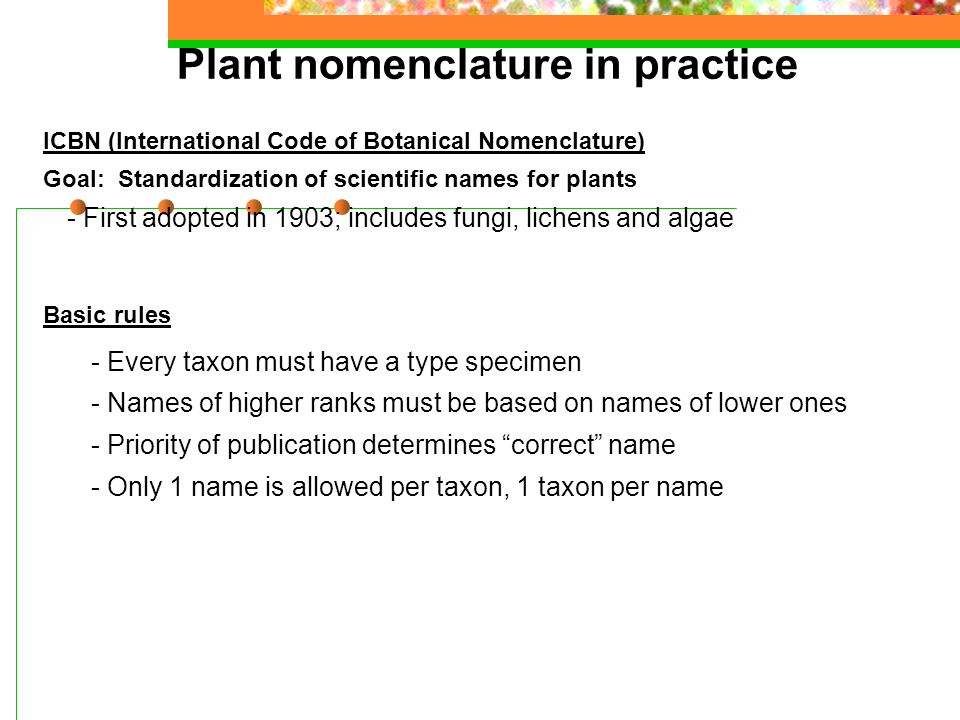 Plant nomenclature in practice ICBN (International Code of Botanical Nomenclature) Goal: Standardization of scientific names for plants - First adopted in 1903; includes fungi, lichens and algae Basic rules - Every taxon must have a type specimen - Names of higher ranks must be based on names of lower ones - Priority of publication determines correct name - Only 1 name is allowed per taxon, 1 taxon per name