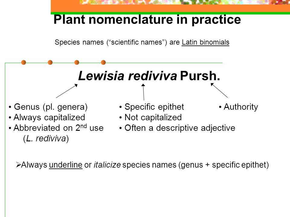 Plant nomenclature in practice Species names ( scientific names ) are Latin binomials Lewisia rediviva Pursh.