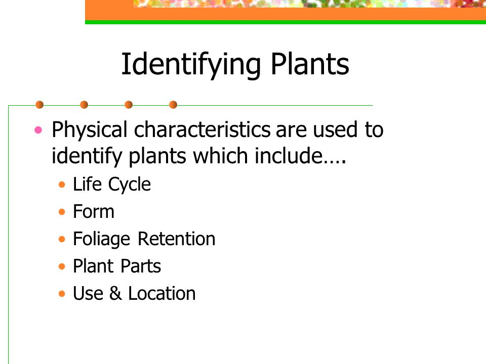 Identifying Plants Physical characteristics are used to identify plants which include….