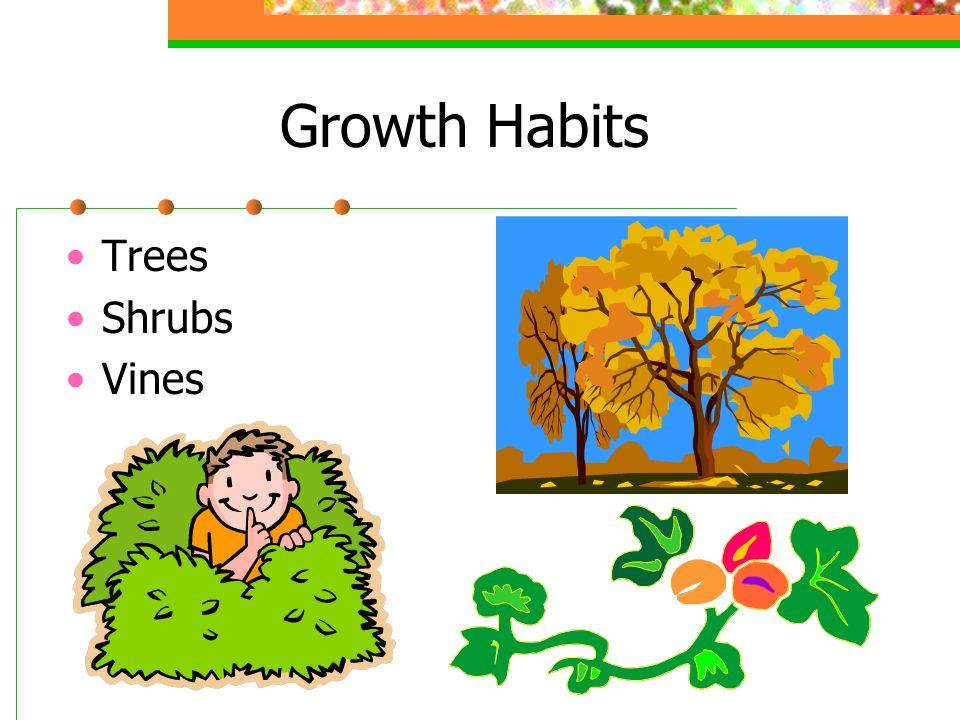 Growth Habits Trees Shrubs Vines