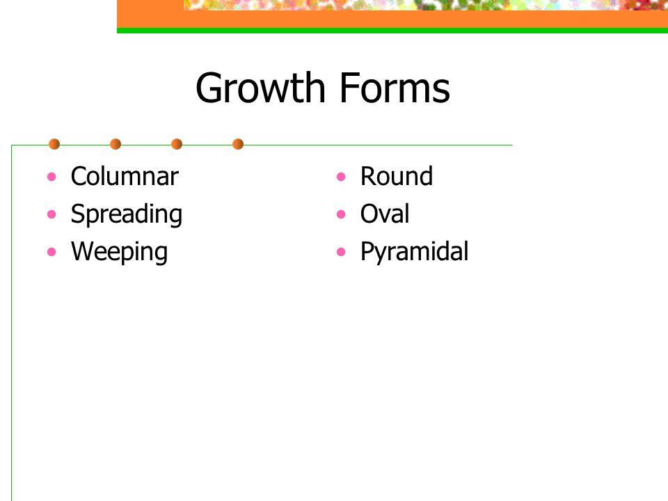 Growth Forms Columnar Spreading Weeping Round Oval Pyramidal
