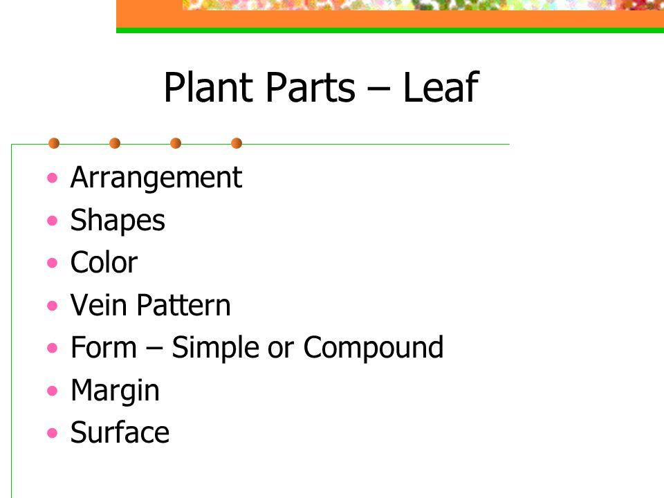 Plant Parts – Leaf Arrangement Shapes Color Vein Pattern Form – Simple or Compound Margin Surface