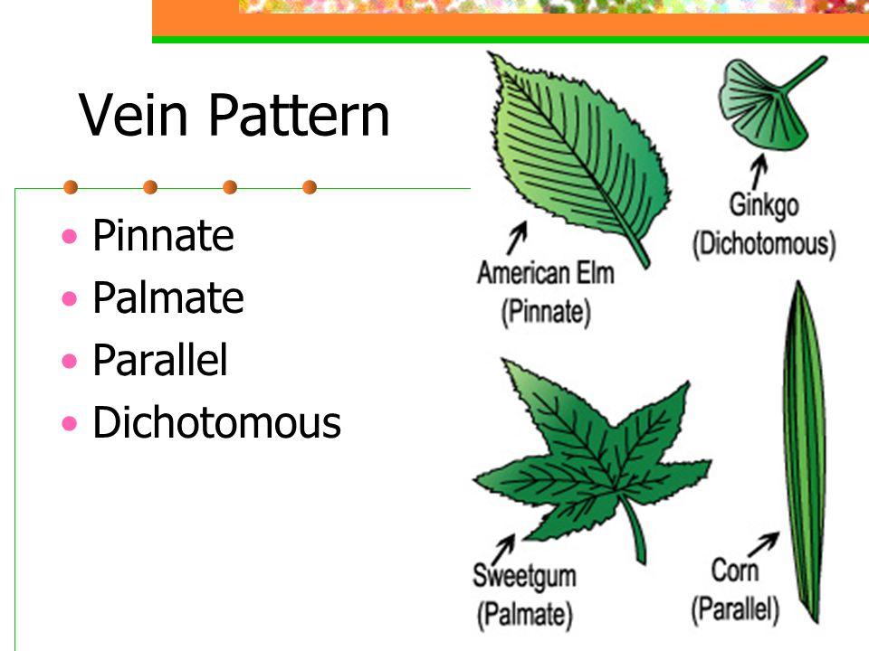 Vein Pattern Pinnate Palmate Parallel Dichotomous