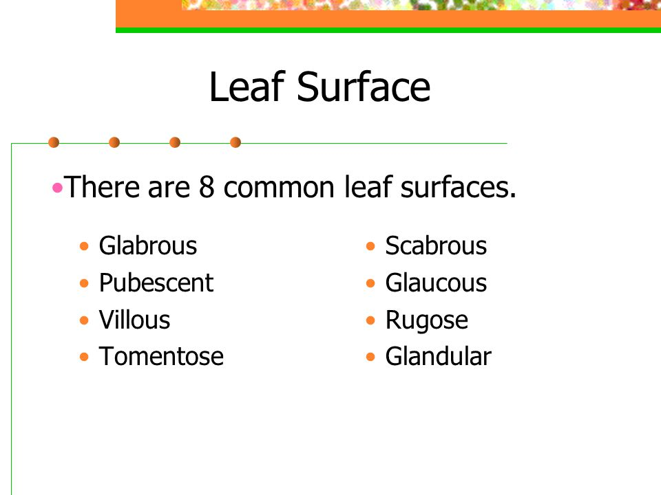 Leaf Surface Glabrous Pubescent Villous Tomentose Scabrous Glaucous Rugose Glandular There are 8 common leaf surfaces.
