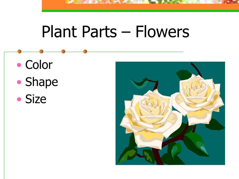 Plant Parts – Flowers Color Shape Size