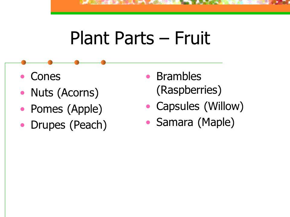 Plant Parts – Fruit Cones Nuts (Acorns) Pomes (Apple) Drupes (Peach) Brambles (Raspberries) Capsules (Willow) Samara (Maple)