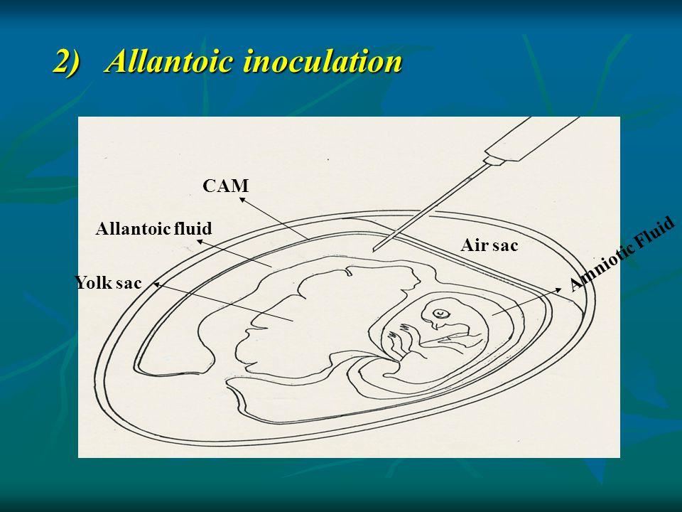 2) Allantoic inoculation Yolk sac Allantoic fluid CAM Air sac Amniotic Fluid