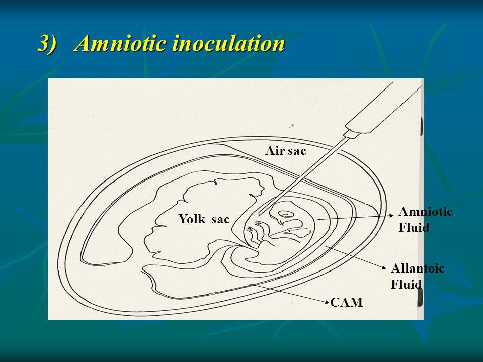 3) Amniotic inoculation Air sac Yolk sac Amniotic Fluid Allantoic Fluid CAM