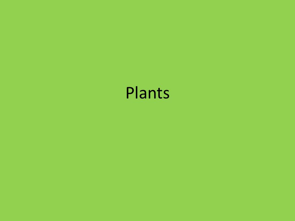 Plants and Photosynthesis An Overview of Plants A.Plant Cells 1.Unlike animal cells, plant cells have a cell wall, which provide structure and protection.