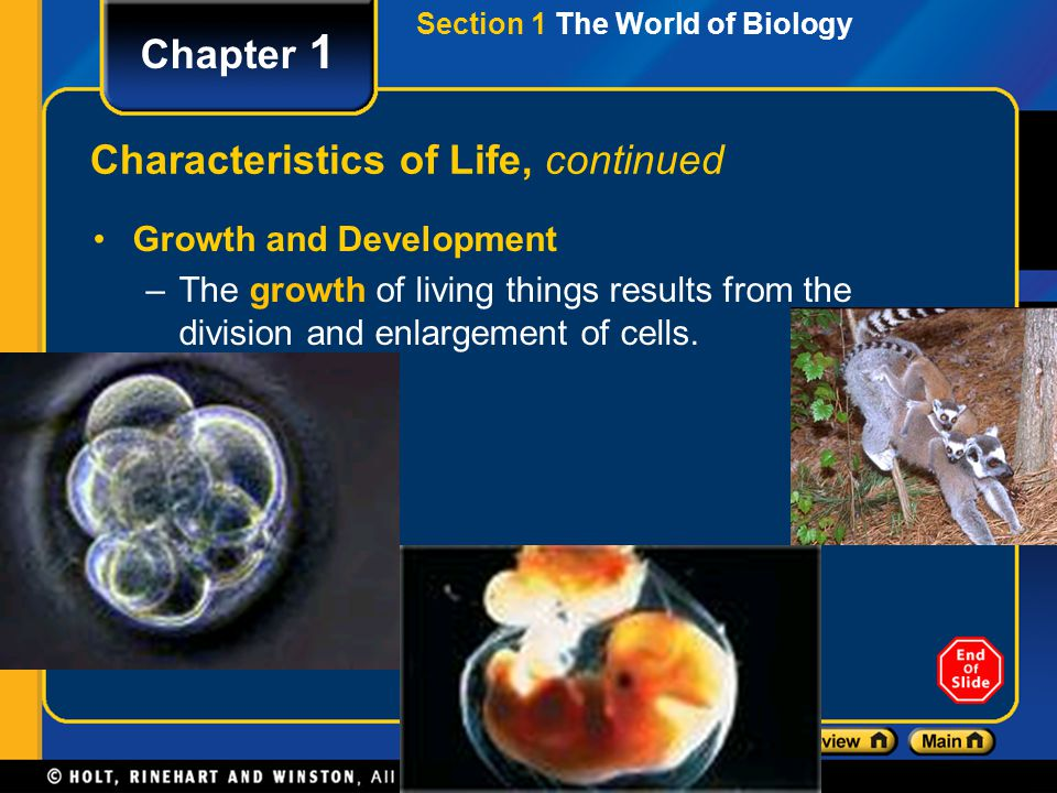 Section 1 The World of Biology Chapter 1 Characteristics of Life, continued Growth and Development –The growth of living things results from the divis