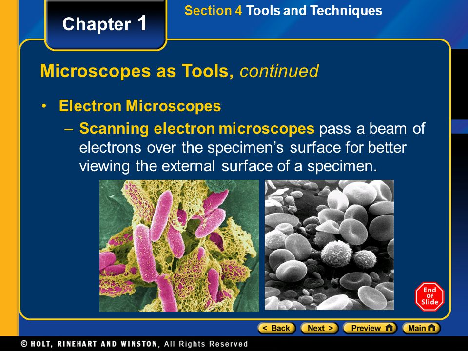 Section 4 Tools and Techniques Chapter 1 Microscopes as Tools, continued Electron Microscopes –Scanning electron microscopes pass a beam of electrons