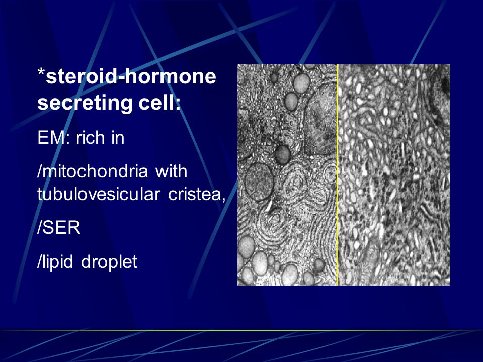 *steroid-hormone secreting cell: EM: rich in /mitochondria with tubulovesicular cristea, /SER /lipid droplet
