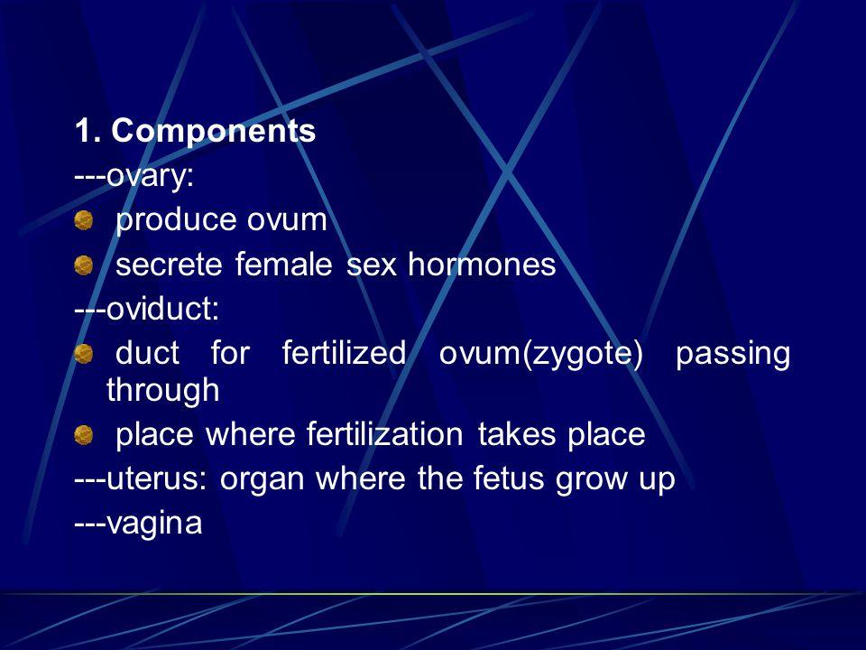 1. Components ---ovary: produce ovum secrete female sex hormones ---oviduct: duct for fertilized ovum(zygote) passing through place where fertilizatio