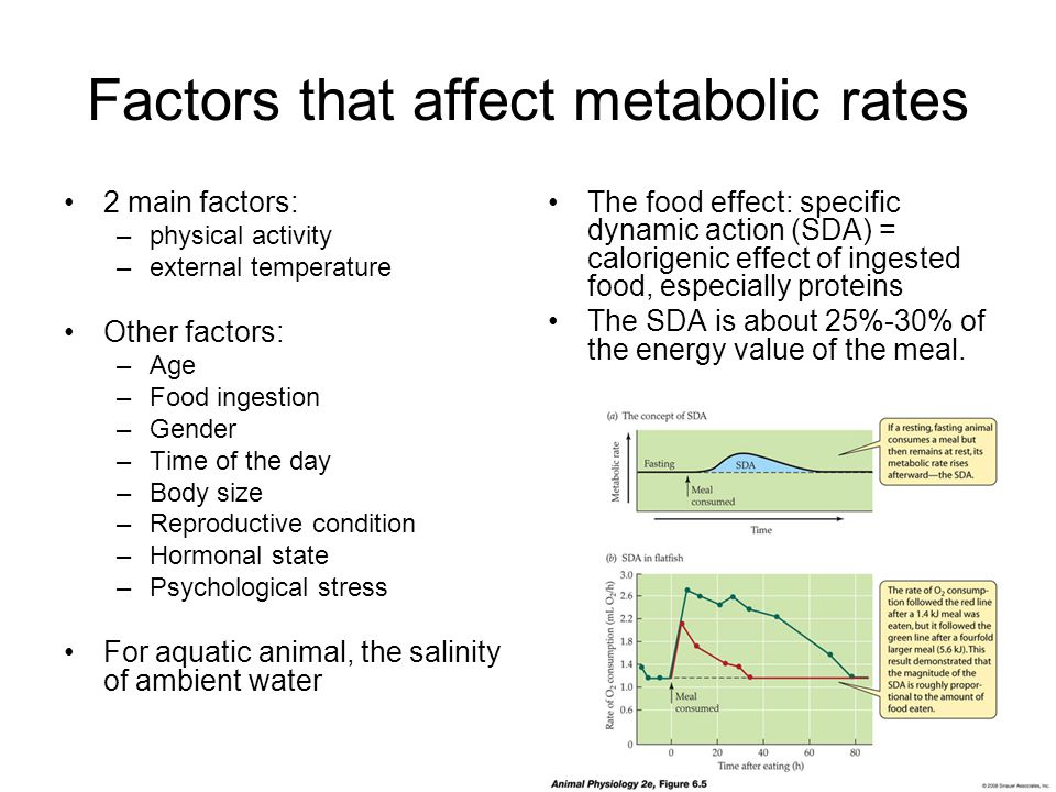 Factors that affect metabolic rates 2 main factors: –physical activity –external temperature Other factors: –Age –Food ingestion –Gender –Time of the day –Body size –Reproductive condition –Hormonal state –Psychological stress For aquatic animal, the salinity of ambient water The food effect: specific dynamic action (SDA) = calorigenic effect of ingested food, especially proteins The SDA is about 25%-30% of the energy value of the meal.