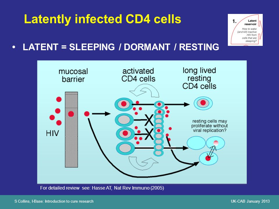 S Collins, I-Base: Introduction to cure researchUK-CAB January 2013 Latently infected CD4 cells LATENT = SLEEPING / DORMANT / RESTING For detailed review see: Hasse AT, Nat Rev Immuno (2005)