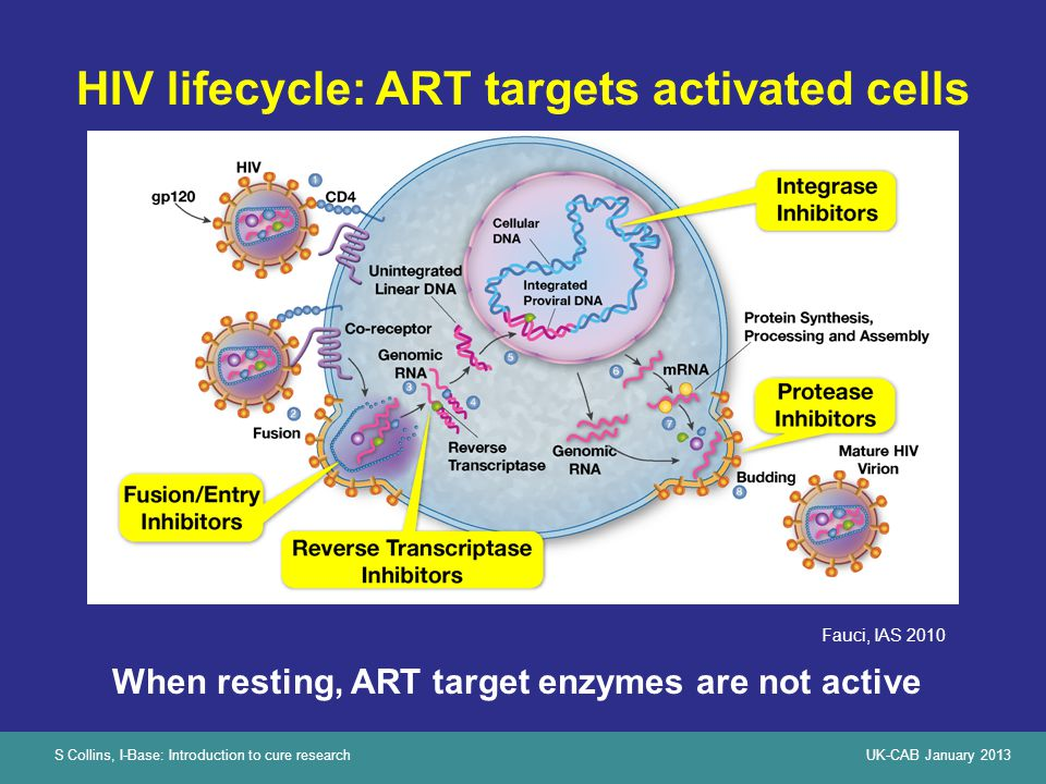 S Collins, I-Base: Introduction to cure researchUK-CAB January 2013 HIV lifecycle: ART targets activated cells Fauci, IAS 2010 When resting, ART targe