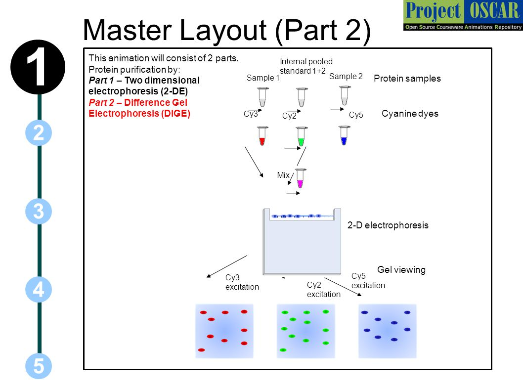 Master Layout (Part 2) 5 3 2 4 1 This animation will consist of 2 parts.