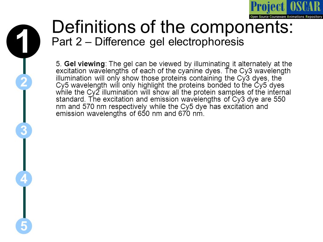 Definitions of the components: Part 2 – Difference gel electrophoresis 5 3 2 4 1 5.