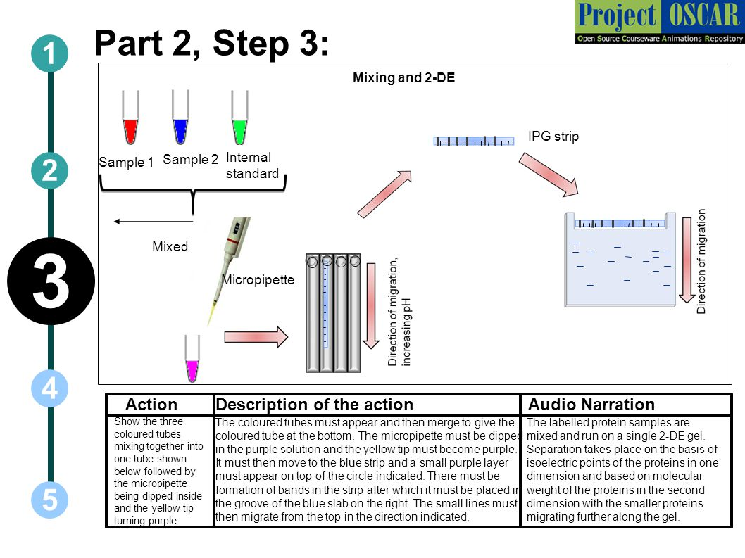 Part 2, Step 3: ActionAudio Narration 1 5 3 2 4 Description of the action Show the three coloured tubes mixing together into one tube shown below followed by the micropipette being dipped inside and the yellow tip turning purple.