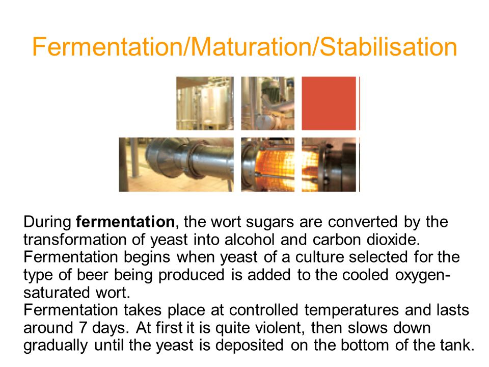Fermentation/Maturation/Stabilisation During fermentation, the wort sugars are converted by the transformation of yeast into alcohol and carbon dioxid