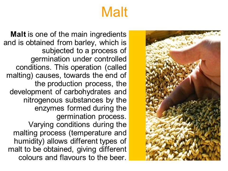 Malt Malt is one of the main ingredients and is obtained from barley, which is subjected to a process of germination under controlled conditions. This